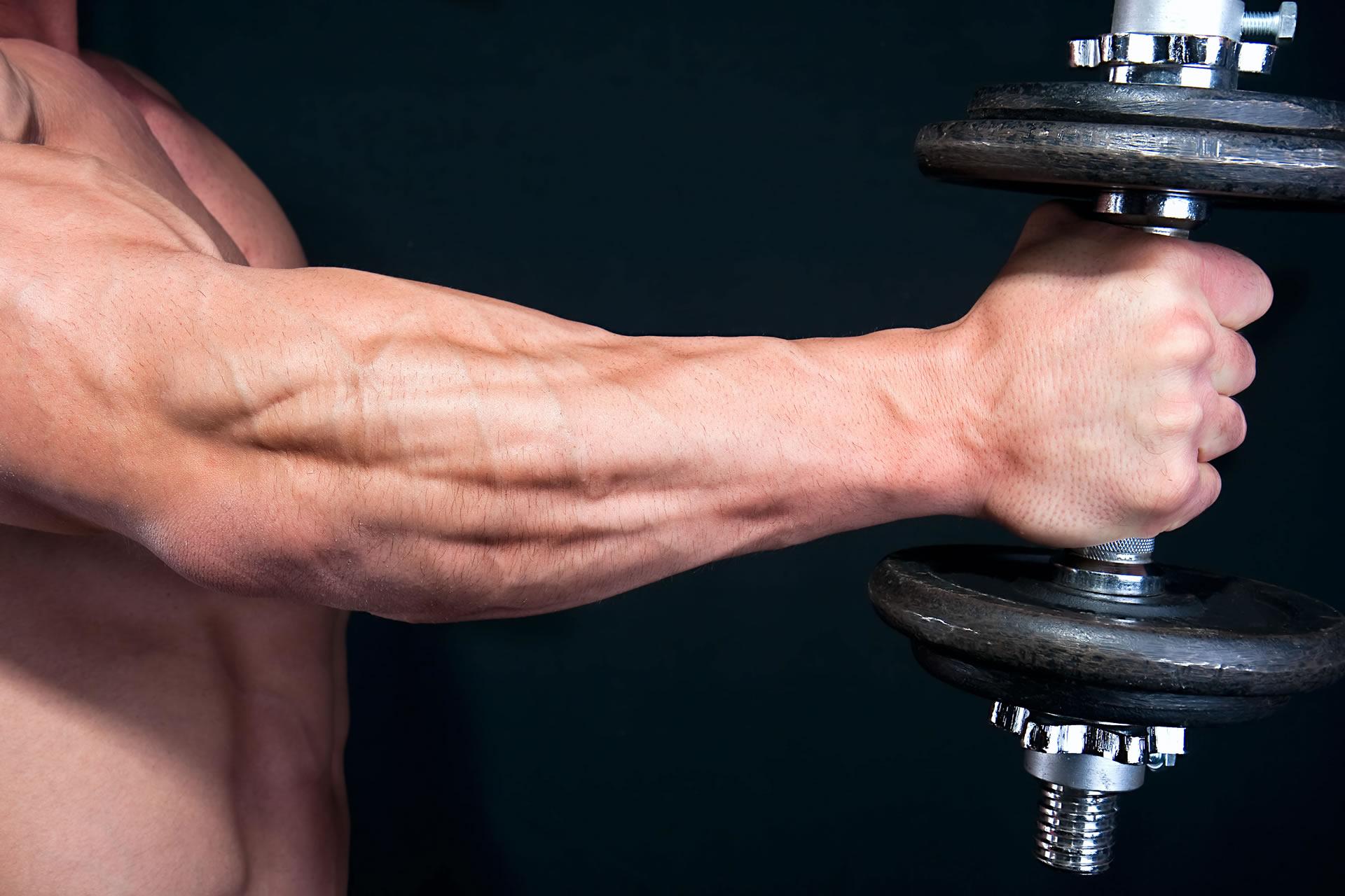 Anatomía   Músculos del Brazo y Antebrazo